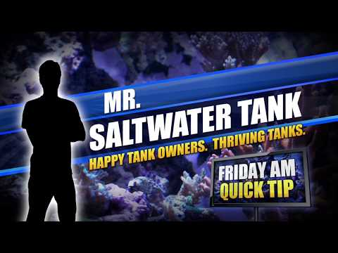 Mr. Saltwater Tank Friday AM Quick Tip: Nipping vs. Destroying
