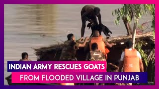 Punjab Floods: Indian Army Rescues Goats From Rooftop Of Submerged House In Jalla Majra Village
