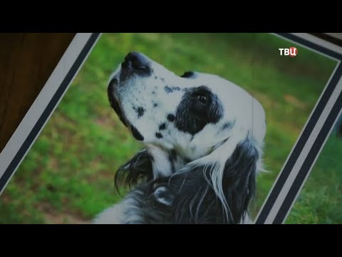 Животные в советском кино