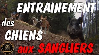 Chiens , sangliers , no kill !!!!