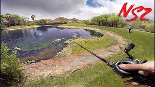 SNEAKING Into GOLF COURSE Tropical Ponds (Never Stop Tour Pt. 7)