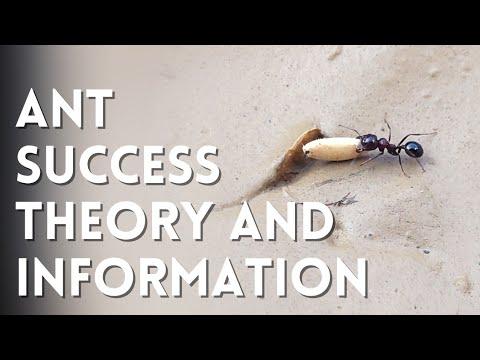 Ant Success Theory | चींटी की यह बात आप नहीं जानते | चींटी की सारी जानकारी | Power Study | #AntPower