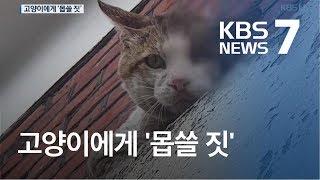 머리에 '못' 박힌 고양이…지속적인 학대 정황도 / KBS뉴스(News)