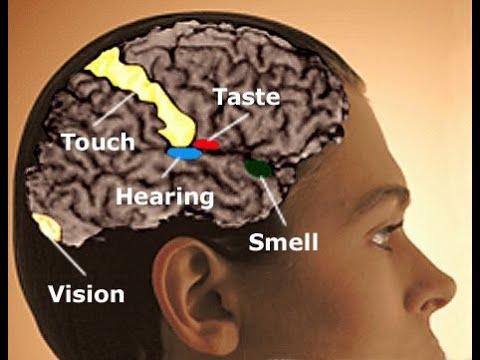 عجائب المخ البشرى