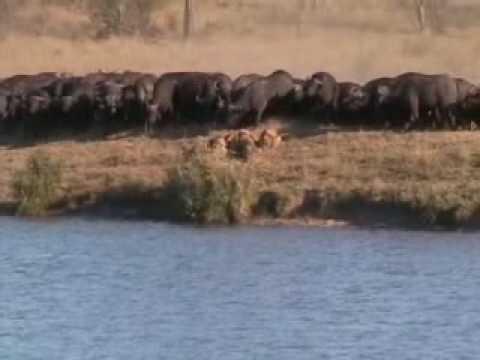 The Battle at Kruger