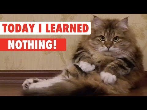 Today I Learned: Nothing! - UCPIvT-zcQl2H0vabdXJGcpg