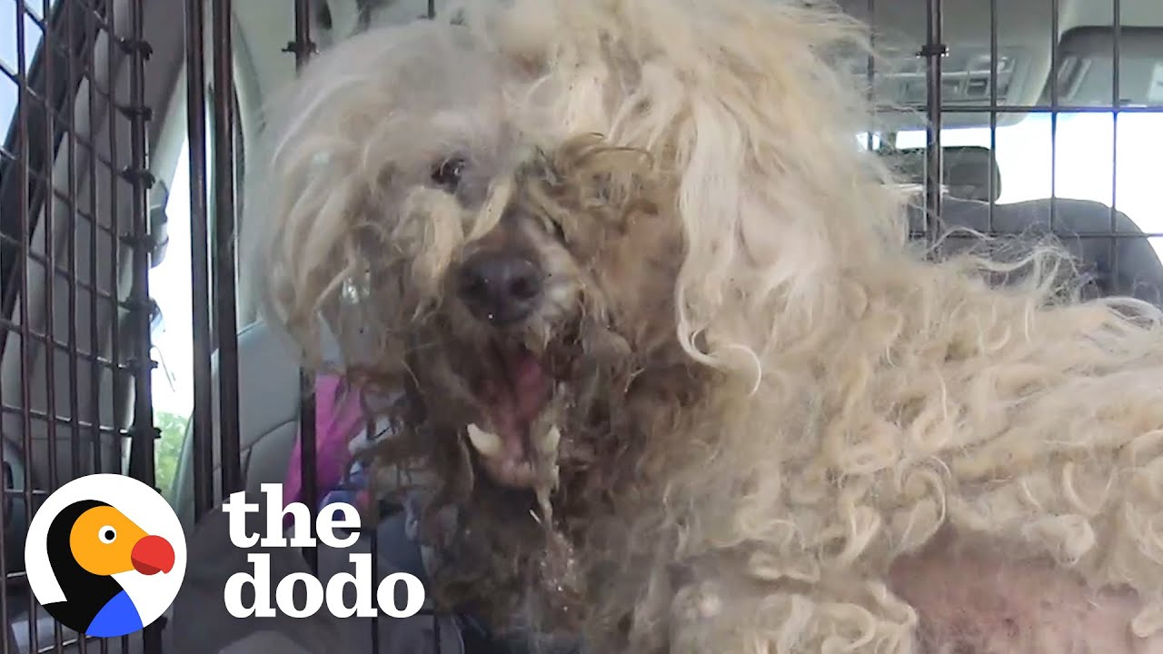 Stray Dog Looks Like A Totally Different Dog Now | The Dodo