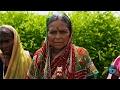 India: Saving the Cotton Community