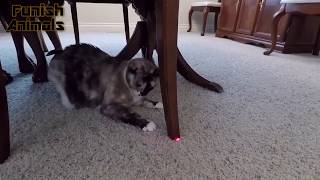 Cats Vs Lasers Funny Animal Compilation