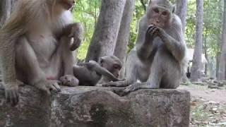 Duke so hungry when saw Duchess mother monkey eating fruits, why Duke fighting small baby monkeys?