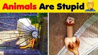 Animals Are Dumb 🤦