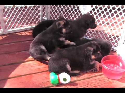Funny,PUPPIES in the morning - UCl7IF1u413ocgMBlPeglaVA