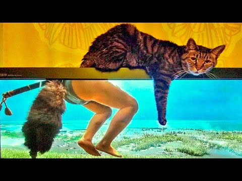 Best Funny Cat Videos That Will Make You Laugh All Day Long 😂😹 - UC4idzq764RTms8P1zgdo7mw