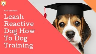 Leash Reactive Dog How To Dog Training - dog training videos for dogs to watch