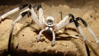 The Real Stories Behind The World's Largest Spiders