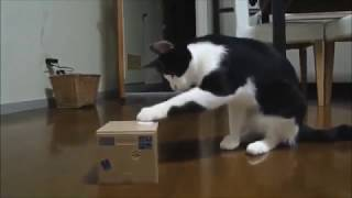 Cat Fails Funny Videos