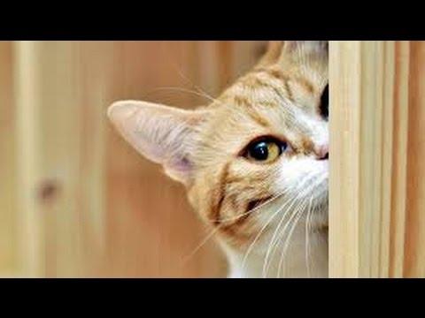 Curious cats - Funny cat Compilation 2017 - UC9GOKbxE-M1fzA6guU0V6Qw