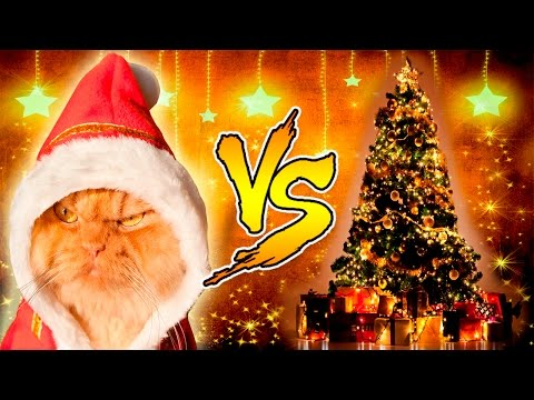 Funny Cats vs Christmas Trees - Funny Cats And Christmas Tree - Funny Cats 2016 - UCoXuKeOibULlSqWL9RAt-cA