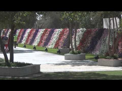 Al Ain Hanging Gardens- Guinness Record Holder