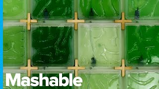 Grow Algae at Home With This Indoor Farming System