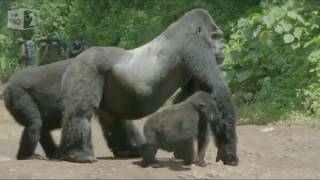 Crazy Animals Video Compilation - Funny & Cute #182