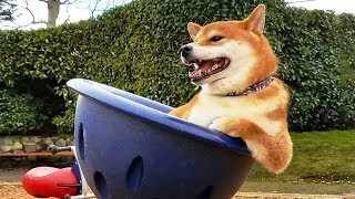 Funniest ? Dogs And ? Cats- Try Not To Laugh ? - Funny Pet Animals' Life