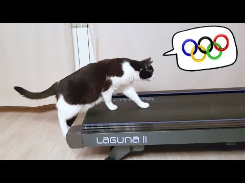 Why am I not at the Olympics? - UCyIqcxz-vR_o2GK4HWuZL8w