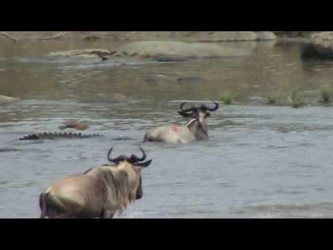 Serengeti: Battle at the Mara river; Great migration in the Serengeti - UCj-MNY18_yOBZR1PZ-FZnRA