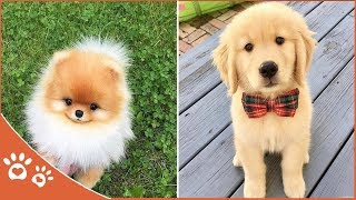 Dog Videos 👀 Dogs Video Compilations (2019) Funny Pet Videos