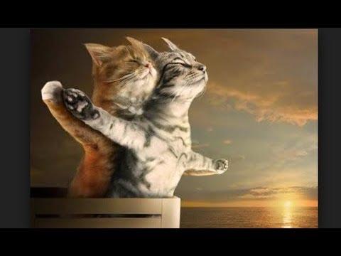 Video Tingkah Lucu Kucing Dan  Bikin Gemes JUGA Bikin Ketawa Ngakak