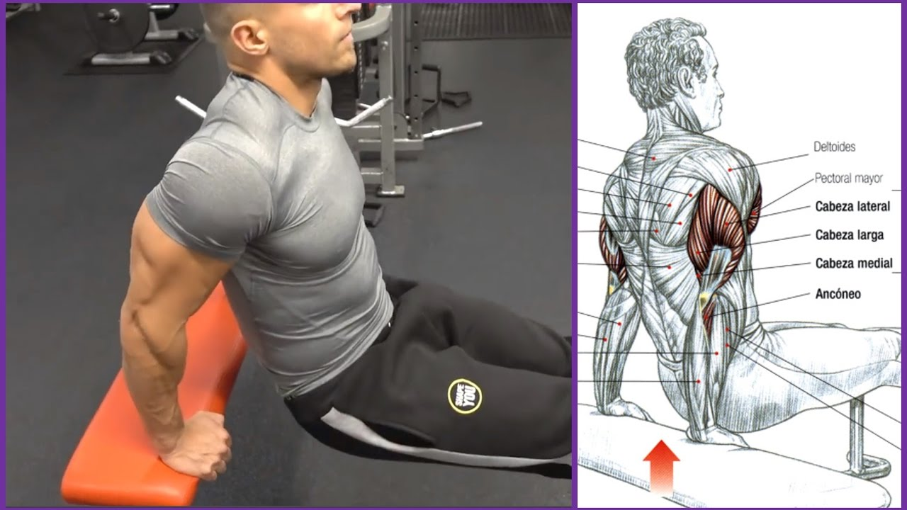 4 Ejercicios Para El Triceps Workout Fitness Body Audiomania