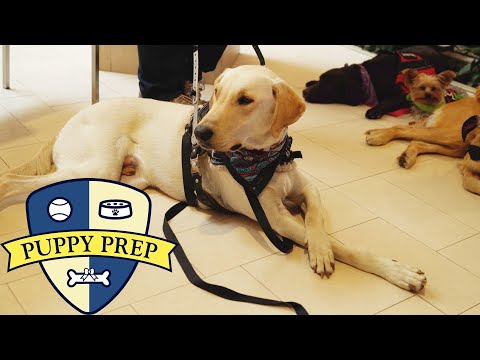 Puppy Prep • The Puppies Have Their Final Test - UCpko_-a4wgz2u_DgDgd9fqA