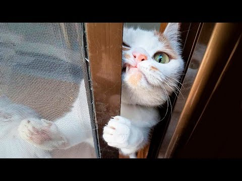 😂  Funniest 😻 Cats and 🐶 Dogs - Awesome Funny Pet Animals' Life Videos 😇 - UC09IvZwjpunzrdHH1EHok-w