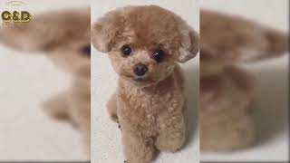 Crazy Animals Video Compilation - Funny & Cute #221