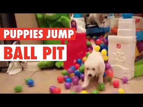 Hyper Golden Pups Splashing in Ball Pit - UCPIvT-zcQl2H0vabdXJGcpg