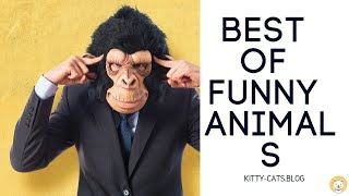 TRY NOT TO CRY out of LAUGHING - The BEST OF funny ANIMALS and FAILS