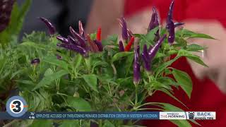 Lisa Briggs talks late summer and fall blooming flowers