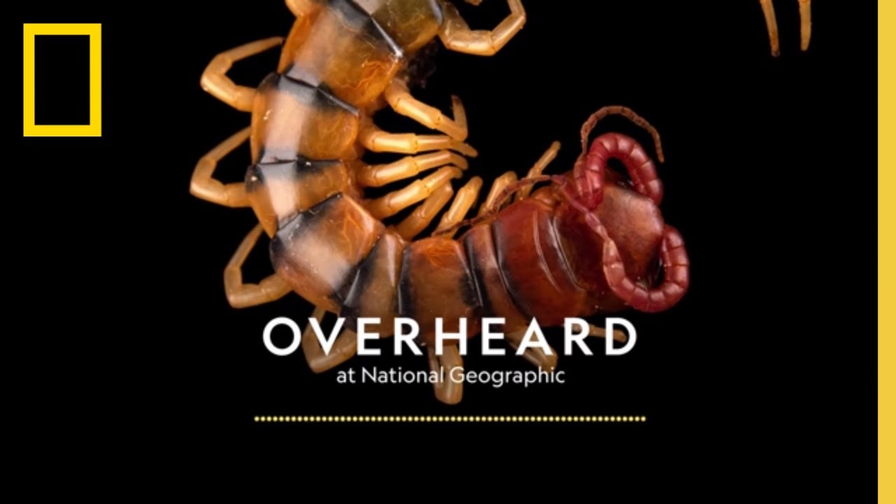 Saving the Creepy Crawlies Release |  Podcast | Overheard at National Geographic