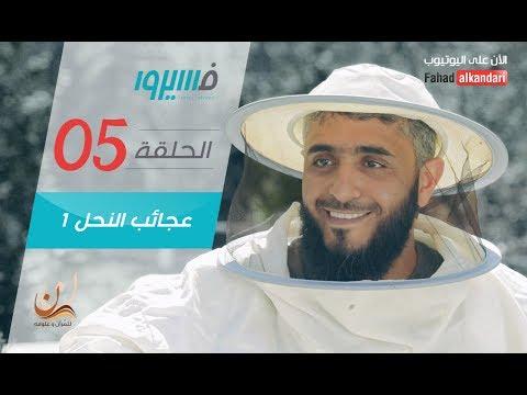 برنامج فسيروا - فهد الكندري - عجائب النحل (1)