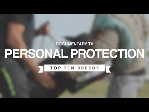 TOP TEN PERSONAL PROTECTION DOGS