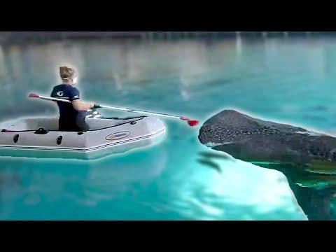 How We Feed Sharks At Aquariums