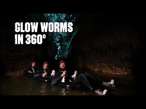 Glow-worms in 360 - Bay of Plenty, New Zealand