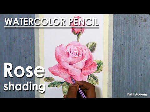 How to Shade A Rose in Watercolor Pencil