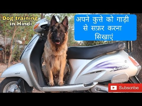 How to train a dog to travel on 2 wheeler vehicle | Dog training in Hindi | - UCj_fWesXsR9ngVy9bdZ1HrA