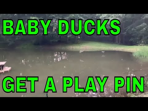 A Partial Solution to protecting the baby ducks