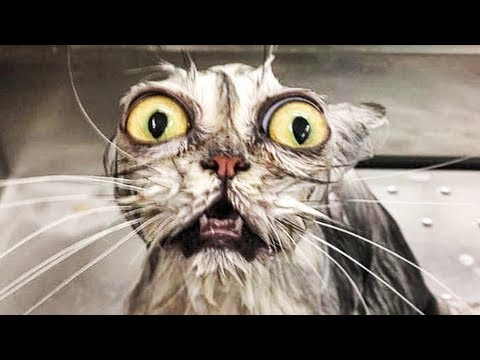 🤣 Funniest 😻 Cats and 🐶 Dogs - Awesome Funny Pet Animals' Life Video 😇