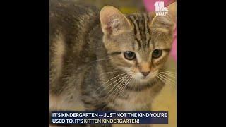 Kitten kindergarten creates long-lasting bonds