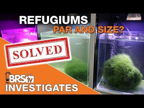 Putting Chaetomorpha to the test: What we found about PAR and fuge size! | BRStv Investigates