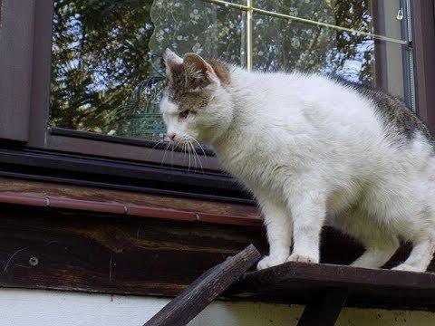 Koty: oddzielne wejście do domu dla kota