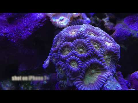 Mr. Saltwater Tank Friday AM Quick Tip: Great Reef Tank Photos From A Smart Phone